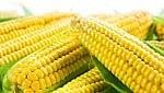 Syngenta perde contro gli agricoltori del Missouri: multa da 217 milioni