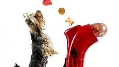Amazon apre il negozio per animali: 180mila prodotti per cani, gatti & co
