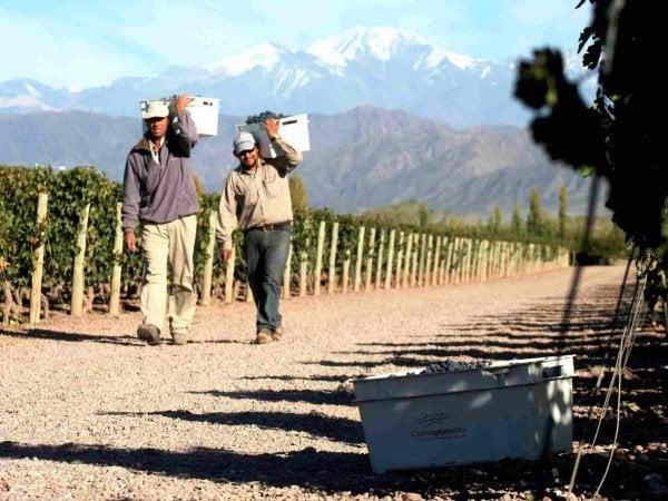 Cheval des Andes, la vigna di Arnault