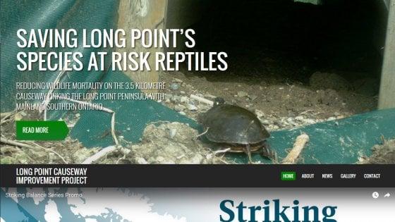 """Canada, 2.7 milioni di dollari per salvare le tartarughe dalle auto: """"Un esempio per tutti"""""""
