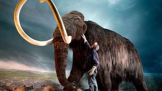 Mammut lanoso, soldi dal cofondatore di PayPal per resuscitarlo