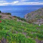 Il vino del Giglio, una bottiglia da 330 mila euro