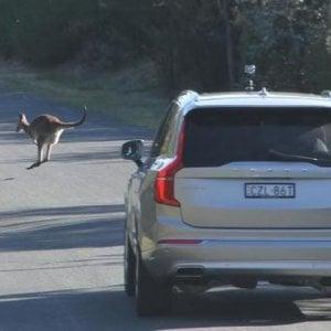 Allarme auto a guida autonoma, in Australia non riconoscono i canguri