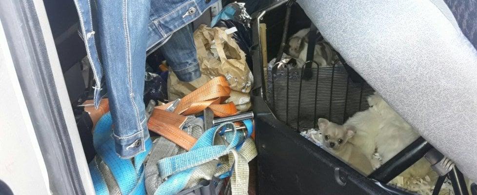 Contrabbando, recuperati 12 cuccioli di cane stipati sotto il sedile di un carro attrezzi