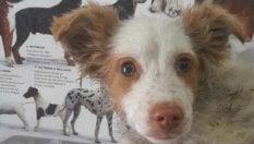 Getta una cagnolina nella fontana per annegarla, salvata da un gruppo di studenti
