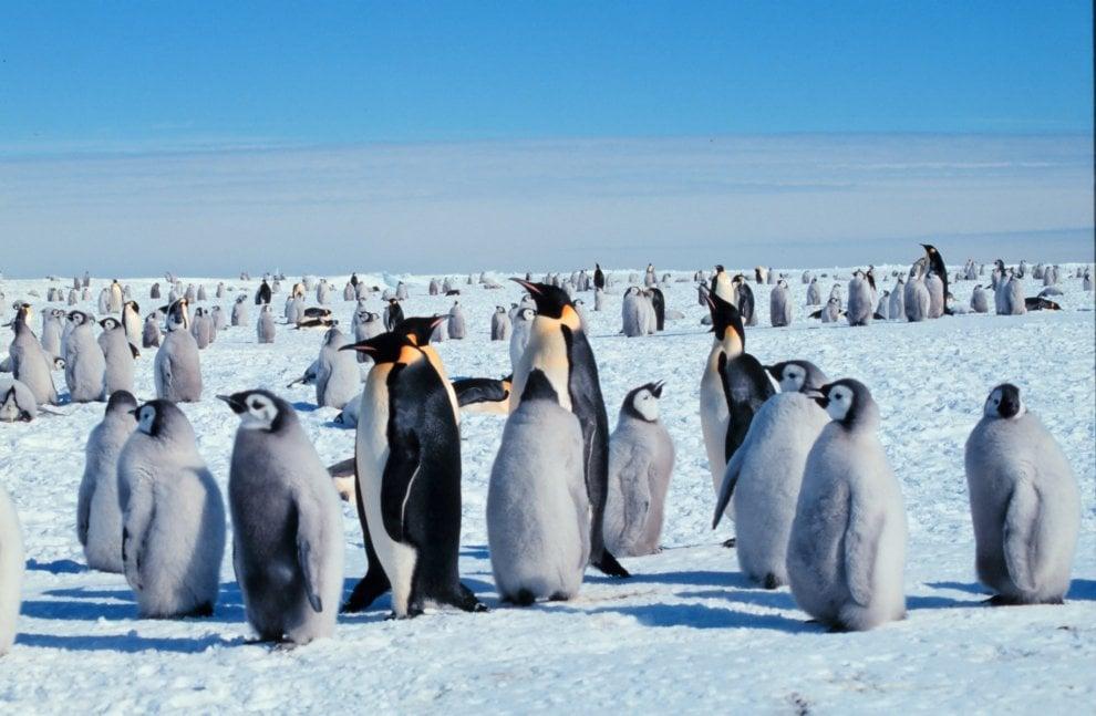 Un futuro incerto per il pinguino imperatore