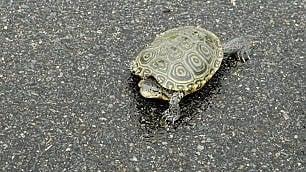 JFK fermo per tartarughe