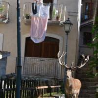 Abruzzo, un cervo sotto al balcone: lo scatto è incredibile