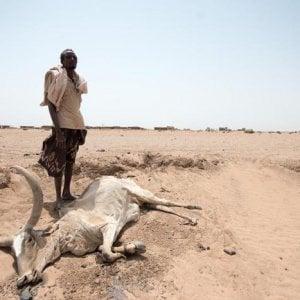 Africa Orientale, l'allerta della FAO: è la terza stagione consecutiva senza piogge e dilaga la fame