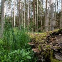 """Clima, lo studio: """"A rischio l'assorbimento di anidride carbonica nelle piante"""""""