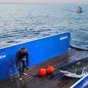 L'America pazza per Mary Lee, lo squalo che non fa più paura
