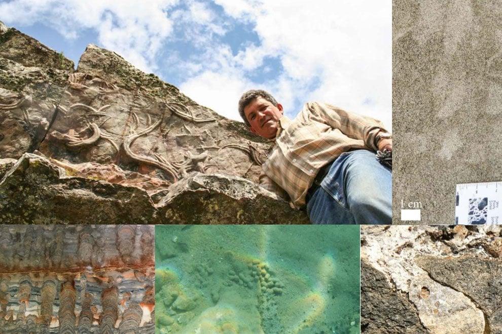 Studiare i fossili terrestri per trovare quelli alieni