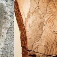 A caccia di tracce fossili su altri pianeti per trovare la vita extraterrestre