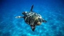 #Underwater: con il Wwf balene e tartarughe nuotano in città a Milano