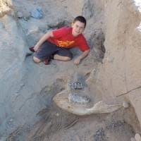 Nuovo Messico, a 9 anni scopre un fossile di un milione di anni fa
