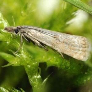 Alto Adige, avvistata rara farfalla dopo 110 anni