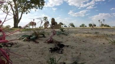 """Zimbabwe, ucciso il figlio di Cecil  """"Basta, i leoni siano patrimonio umanità"""""""