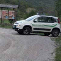 Trentino, uomo aggredito da un orso su un sentiero: non è grave