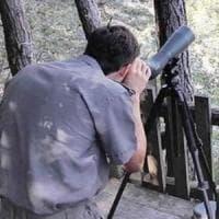 Cani Laika e proiettili narcotizzanti, nei boschi di Trento continua la caccia all'orso