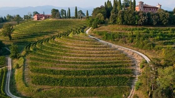 Friuli Venezia Giulia, una strada del vino, dai monti al mare
