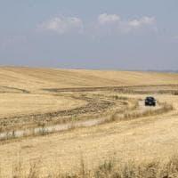 Siccità, per un chilo di riso 3.400 litri d'acqua: la lotta per fermare lo spreco nei...
