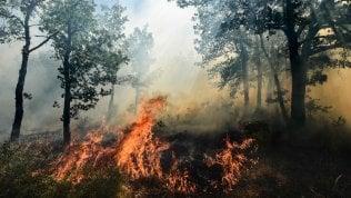Anche la Costa Azzurra divorata dagli incendi: migliaia di personeevacuate da case e strutture turistiche