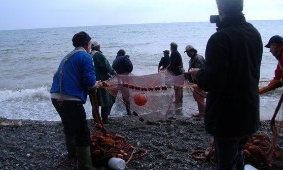 """La Calabria contro la Ue: """"Difendiamo la sardella, il nostro caviale dei poveri"""""""