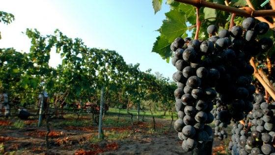 Vino, la riscossa del Lazio: ecco le 16 bottiglie da mettere in cantina