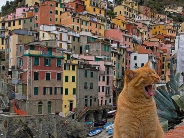 In vacanza con cani e gatti: tre su cinque cambiano meta se non ci sono strutture ad hoc