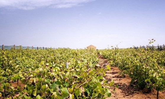 Dal Fumin al Minutolo, 20 vini autoctoni raccontati dai loro produttori