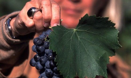 """Altro che Sauvignon e Merlot: sono i vitigni autoctoni i """"monumenti"""" che raccontano l'Italia partendo dalla terra"""