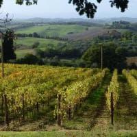 Altro che Sauvignon e Merlot: sono i vitigni autoctoni i