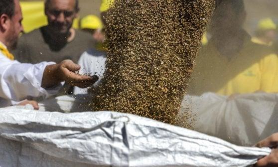 L'oro di Castelluccio: ecco la lenticchia del dopo terremoto