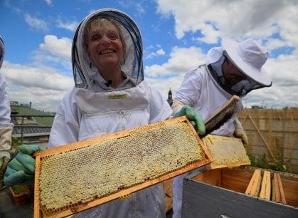 Sos miele italiano: tra siccità, incendi e inquinamento la produzione è crollata a un terzo