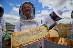 Sos miele italiano: tra siccità incendi e inquinamento  crolla la produzione