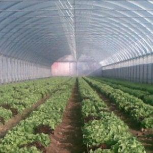 L'aumento di anidride carbonica impoverirà i raccolti di proteine e ferro