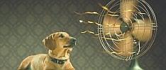 Cani e gatti, come proteggerli  dal solleone  di ELVIRA NASELLI
