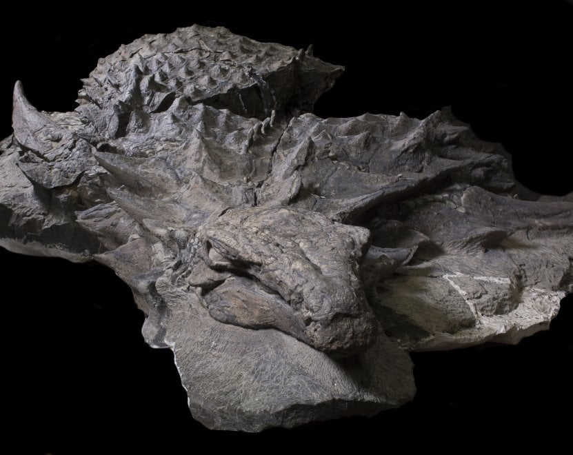 Quel dinosauro corazzato è la 'Monna Lisa' dei fossili