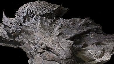 Quel dinosauro corazzato  è la 'Monna Lisa' dei fossili  foto