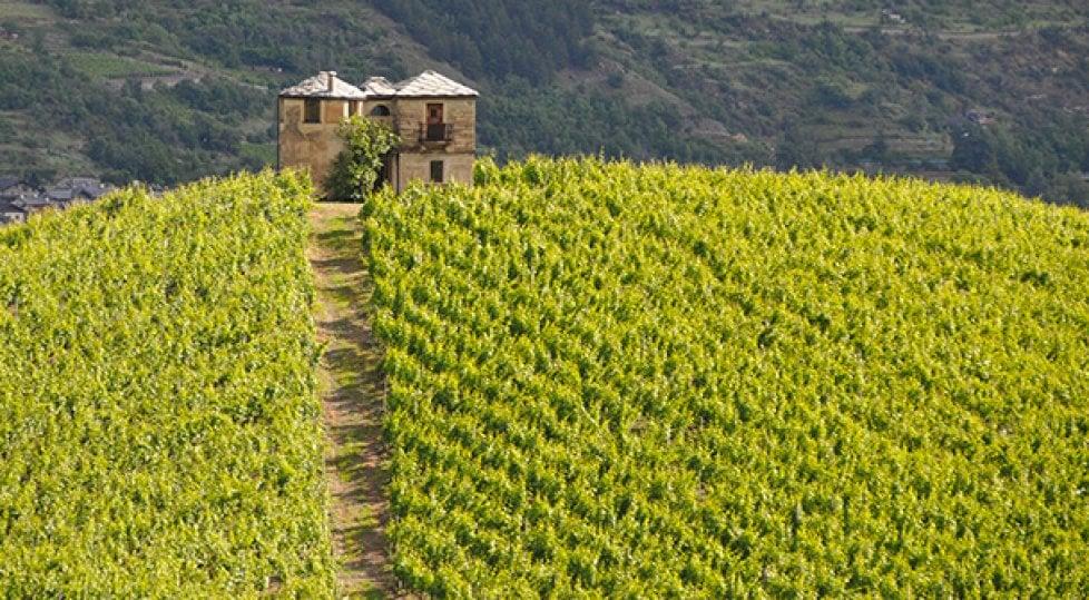 Altro che Sauvignon  e Merlot: i vitigni autoctoni raccontano la vera l'Italia