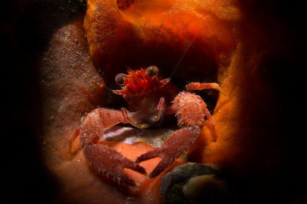 La magia delle foto subacquee a Zoagli