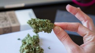 Dalle prescrizioni ai software:  Meadow, l'Amazon della marijuana