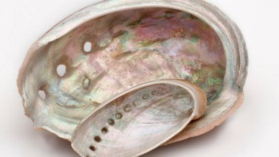 Come nasce la madreperla, prezioso segreto dei molluschi