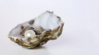 Svelato il segreto dei molluschi:ecco come nasce la madreperla