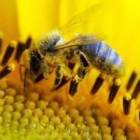 Coldiretti: il caldo sconvolge le api, miele dimezzato