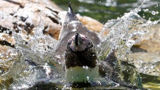 Pinguini come in CSI: analisi forensi sulle penne per tracciarli