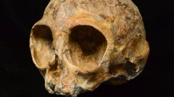 Il teschio del nostro più antico antenato: è Alesi, vissuto 13 milioni di anni fa