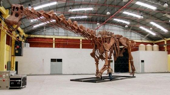 Titanosauro Patagonico: è lui il dinosauro più grande