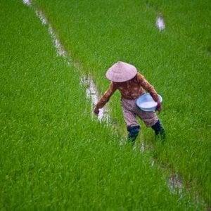 Vietnam, terre sottratte agli agricoltori a favore della multinazionale Viettel: condannati 14 funzionari
