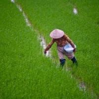 Vietnam, terre sottratte agli agricoltori a favore della multinazionale